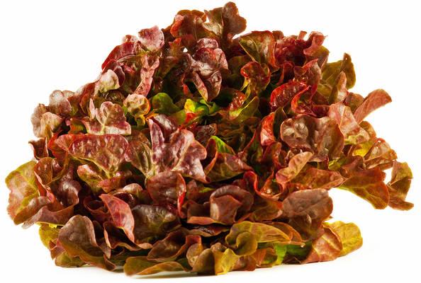 Eichblattsalat rot Produktbild