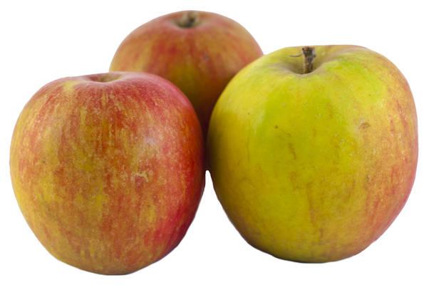 Apfel Holsteiner Cox Produktbild