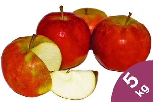 Apfel Elstar 5kg Produktbild