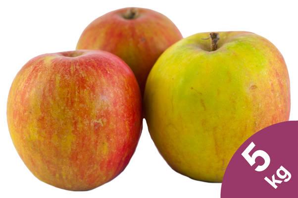Apfel Holsteiner Cox 5kg Produktbild