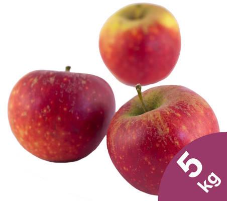 Apfel Ingrid Marie 5kg Produktbild