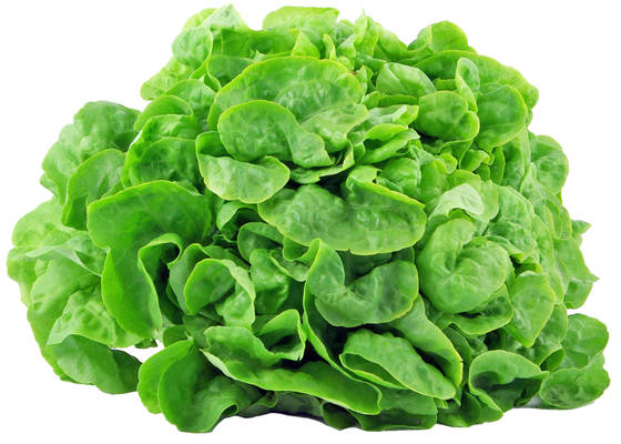 Eichblattsalat grün Produktbild