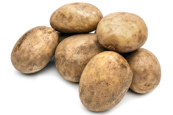 Kartoffeln Leyla Produktbild